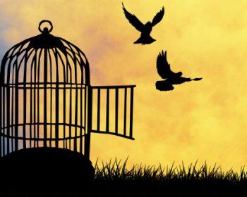 fuori dalla gabbia