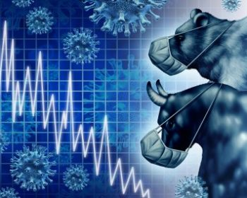 orso toro con mascherina